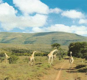 There's wildlife aplenty on the fabulous game farms in the area.