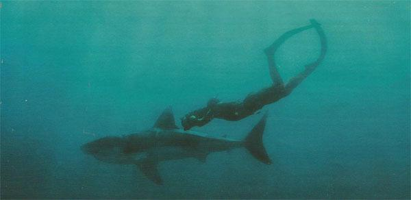 Underwater photographer Fiona Ayerst and her team are not scared to get into the water with great white sharks.