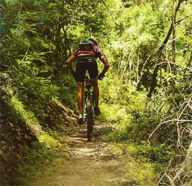 Forest singletrack is the hallmark of these trails and provides some shade in the heat