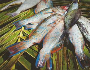 Fresh seafood forms a big part of the Seychellian diet.