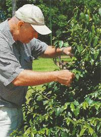 Tim Buckland carefully checks the trees for any signs of pests