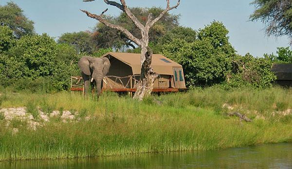 Botswanas Camp Savuti is famous for its elephant sightings