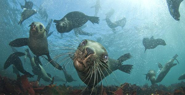 Seals, snorkels, and salty water