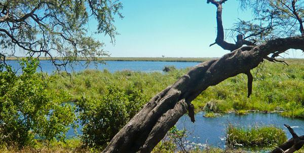 The marsh and lagoon in front of Camp Linyati teems with crocodile and hippo