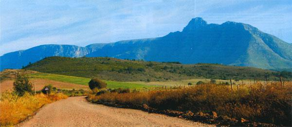 The road to Oudebosch Guest farm at the foot of the Langeberg mountains