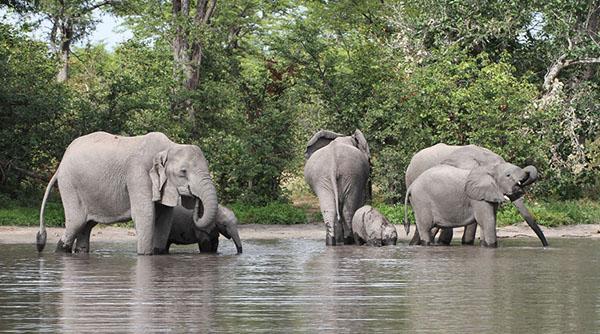 Going wild in Botswana
