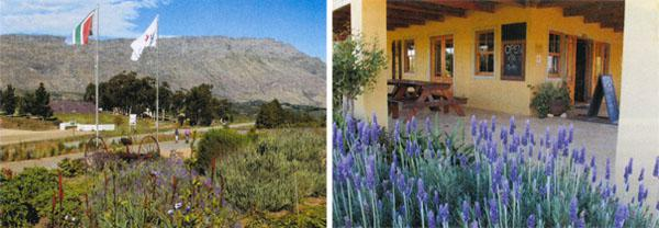 The arresting view of the Langeberg mountains from Akkerboom Trading Post. At Akkerboom the relaxed vibe invites visitors to linger on the stoep.