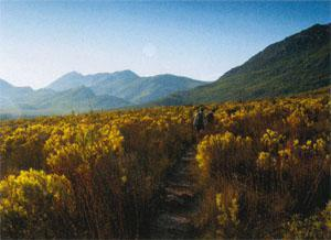 It's best to get an early start when hiking through the fynbos to the Barrydale waterfall orthe heat will catch you.