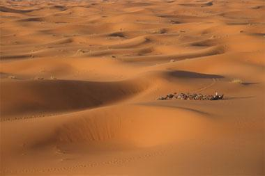 Call from the Sahara