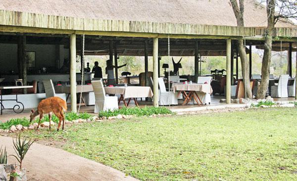 Wildlife coming to visit at Tanda Tula Safari Camp