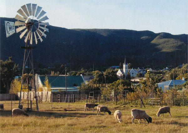 Lamb chops on the hoof: older plots in the village are big enough to keep a few sheep, giving Barrydale an atmosphere of pastoral charm.