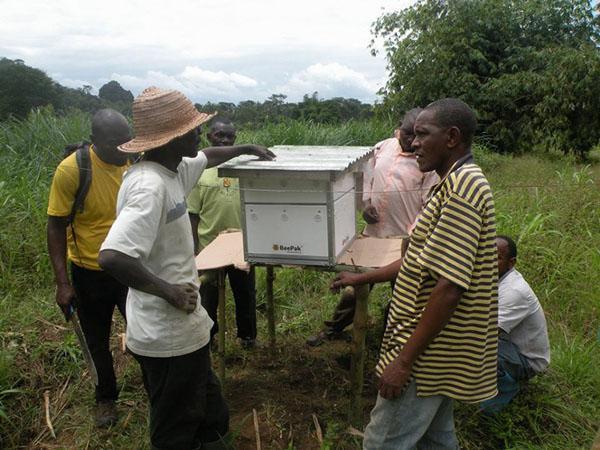 Bee-hive community
