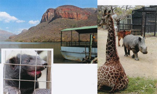 CLOCKWISE FROM ABOVE: Take a cruise on the Blyderivierspoort Dam; Gerald the giraffe, Olive the rhino and Petal the sable have become firm friends at Moholoholo; It's a spectacular if gruesome sight to watch mealtime in the vulture restaurant at Hoedspruit Endangered Species Centre; Love Bitez at Klaserie 1 Stop is not quite what you might think but is a great place for coffee and a snack; Lucy Green from Moholoholo Rehabilitation Centre plays with Julius the orphan baby honey badger; Stoffel the honey badger at Moholoholo has become so adept at escaping, he now has his own YouTube video.