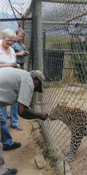 Visitors are treated to many different animal residents at Moholoholo Rehabilitation Centre, including this beautiful leopard.