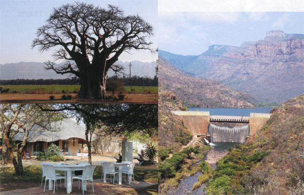This is the smaller upright version of the Giant Baobab.  Sit under the shady acacias at the Cotton Club Cafe at Godding & Godding.  Stop on the way up to the Information Centre at Blyderivierspoort Dam and look at the wall.