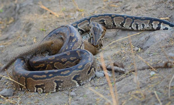 python6-campliyanti-kevinmac