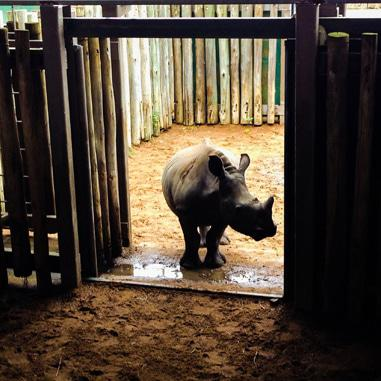 The film that could make a difference for rhinos