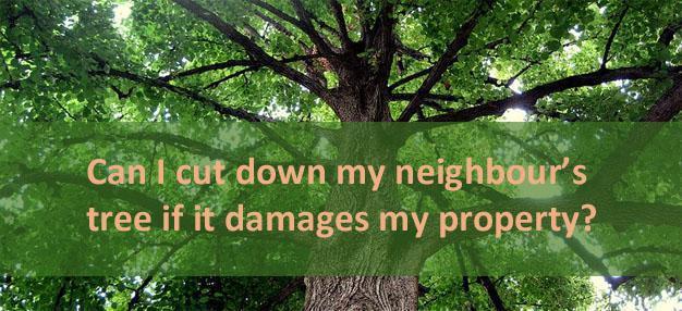 Neighbour's tree