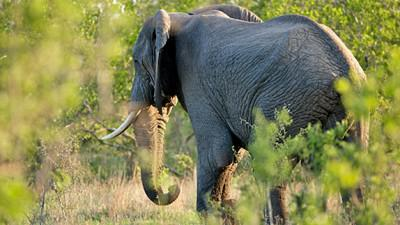 Northern Kruger National