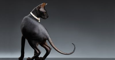 Proud Dog Salon - The Cat Through The Ages