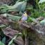 Spotting birds at Babylonstoren