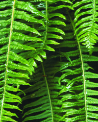 Pine plantations, indigenous forest, fynbos