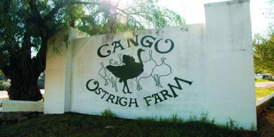 Cango Farm
