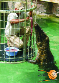 Feed and Dive the Crocodiles