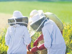 The beekeepers, who are Trustees of the SBHBT.
