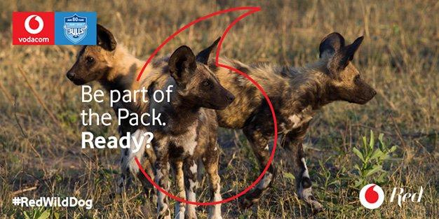 Vodacom-Wild-Dogs-700x350px-v3