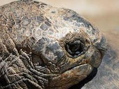 A giant tortoise stays at the park