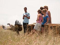 Educating people about the importance of vultures