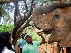 Educational Program at The Elephant Sanctuary Hartbeespoort