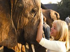 Elephant interaction at The Elephant Sanctuary Hartbeespoort