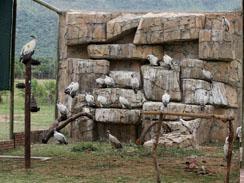 Vulture Rehabilitation Centre Enclosure