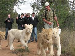 Ukutula Lion Centre