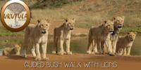 ukutela lion walk and conference