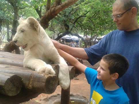Chameleon Lion Park