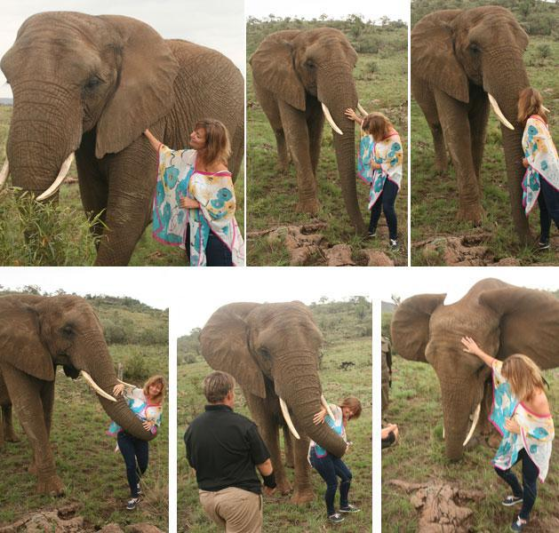 Elephant Interaction Glen Afric Lodge