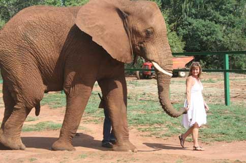 Walk with Elephants Elephant Sanctuary