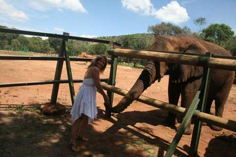 Elephant Sanctuary Harties