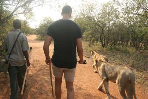 Walk with Lions Ukutula