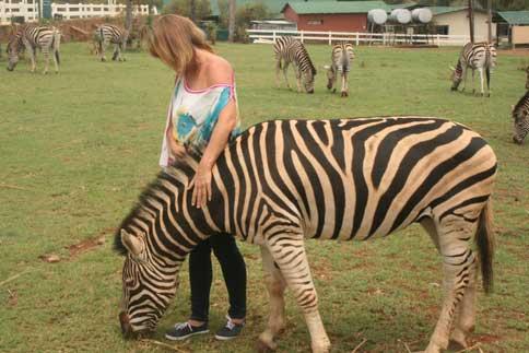Zebra Interaction Glen Afric