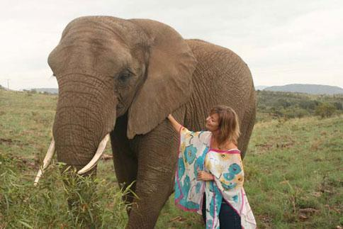 Elephant Interaction Hartbeespoort South Africa