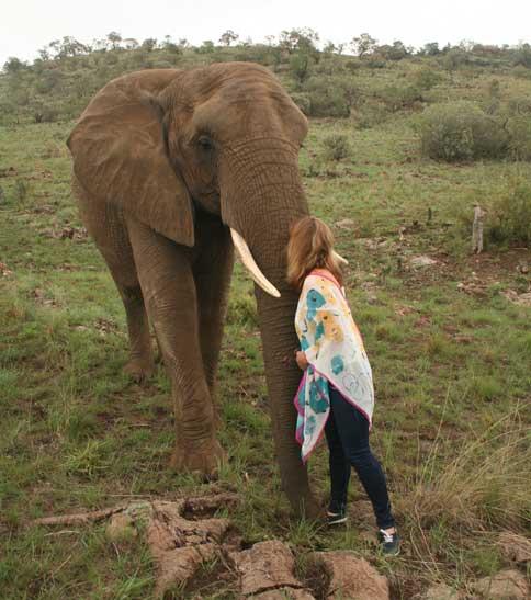 Elephant interaction near Sandton