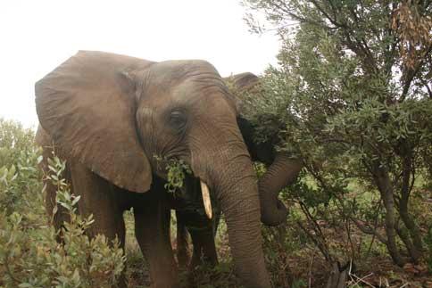 Elephant Rehabilitation South Africa