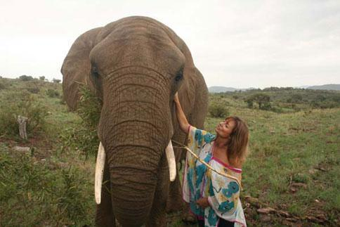 Elephant Interaction South Africa