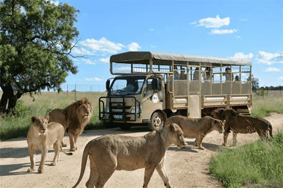 Lion & Safari Park   Hartbeespoort