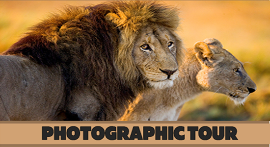 Harties private photographic tour @ Lion & Safari Park
