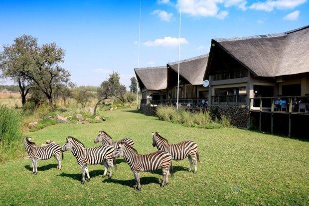Restaurant at the Lion & Safari Park | Hartbeespoort
